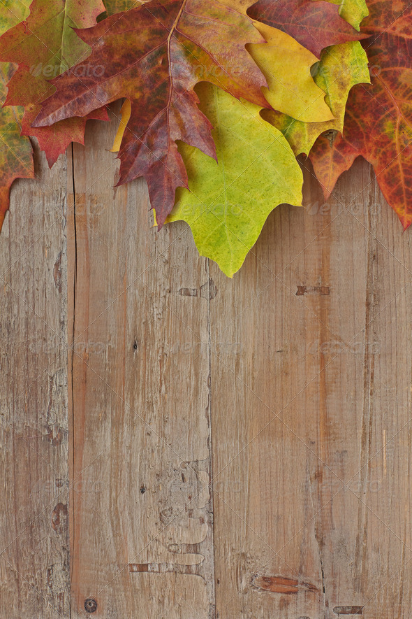 Colorful autumn leaves over wooden background - Stock Photo - Images