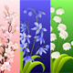 Thre Beautiful Spring Flowers Animation With Alpha - VideoHive Item for Sale