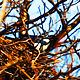 Magpie Nest Renovation 2