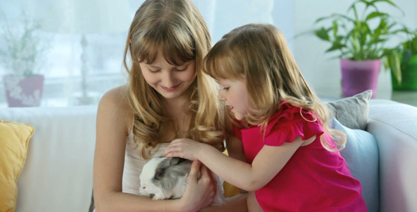 VideoHive Cute Bunny 2021745