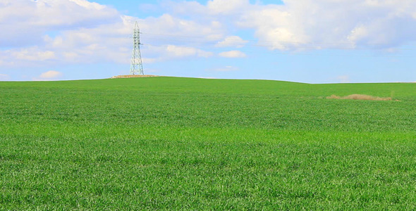 Wheat Field And Electricity Pylon