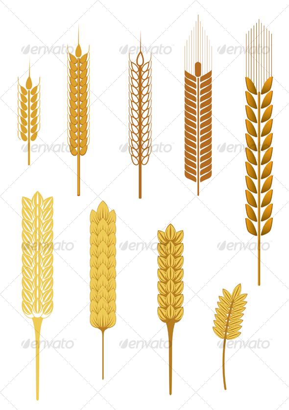 Ripe cereal ears - Decorative Vectors