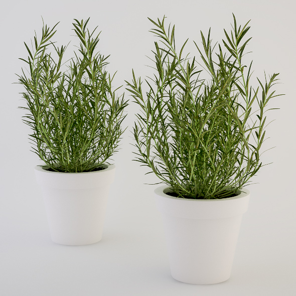 Rosemary in a Pot - 3DOcean Item for Sale