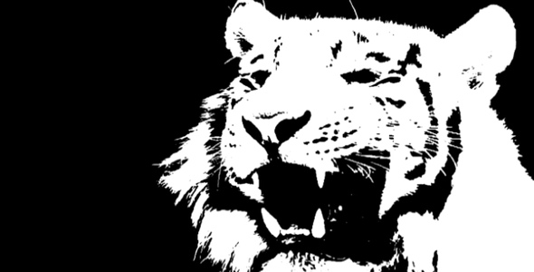 White Tiger - Muut Taustat Motion Graphics