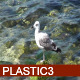 Seagull In The Sea HD - VideoHive Item for Sale