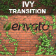 Ivy Transition - VideoHive Item for Sale