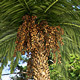 HD Trees :  Palm V1 - 3DOcean Item for Sale