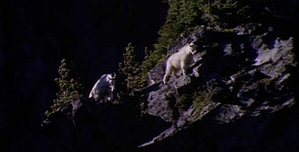 Mountain Goats Sequence