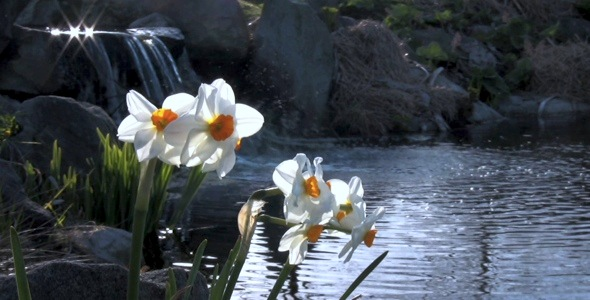 Daffodil Lake HD Pack 9