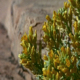 Flower Growing from Rock 2: 3 shot - VideoHive Item for Sale