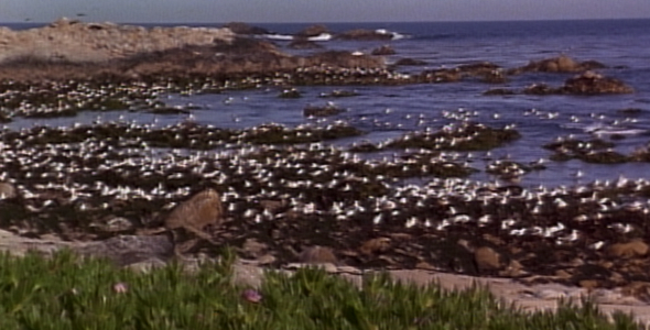 Flock of Gulls along Shoreline 2
