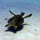 Turtle Swimming In Coral Reef - VideoHive Item for Sale