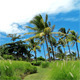 Tropical Landscape - VideoHive Item for Sale