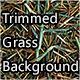 Trimmed Grass Background