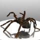 Tarantula spider - 3DOcean Item for Sale