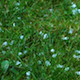 Nature HD/ Hail Stones - VideoHive Item for Sale