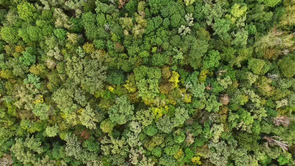 Download Many Green Trees In Forest nulled download
