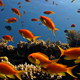 Colorful Fish On Coral Reef - VideoHive Item for Sale