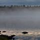 Fog On A Lake - VideoHive Item for Sale
