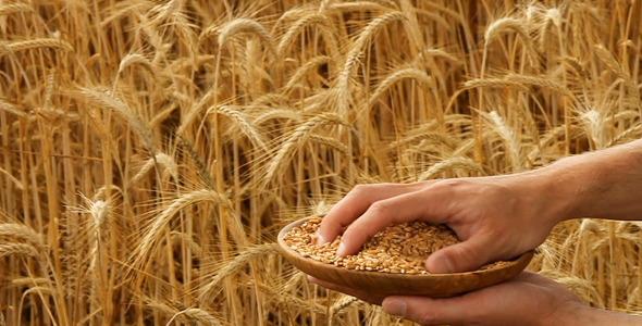 Grain Pack