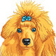 Vector Color Sketch of the Dog Red Poodle Breed - GraphicRiver Item for Sale