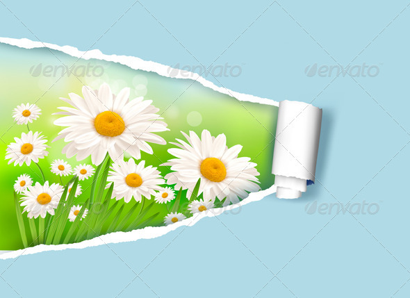 Nature Background with Fresh Daisy and Rip Paper - Flowers & Plants Nature