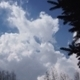 White Cumulus Clouds And Spruce Branches - VideoHive Item for Sale