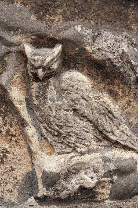 PhotoDune owl 4082630