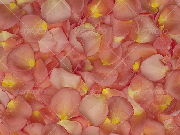 GraphicRiver Rose Petals Texture Background 85595
