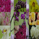Flowers  - VideoHive Item for Sale
