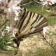 Butterfly On Flowers - VideoHive Item for Sale