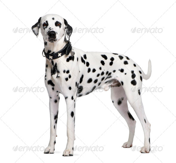 ArtOfZoo Dog