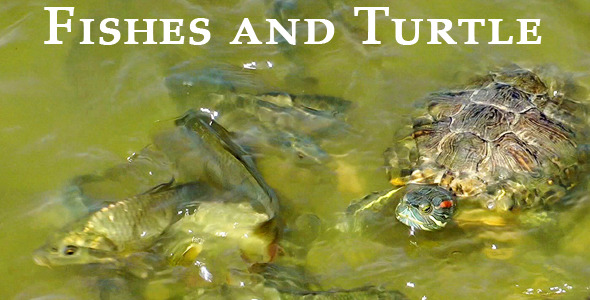 Fishes And Turtle 2