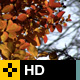 Fall Leaves Series - Clip 002 - VideoHive Item for Sale