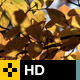Fall Leaves Series - Clip 003 - VideoHive Item for Sale
