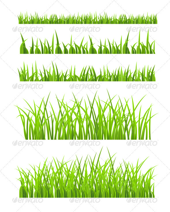 Green Grass - Seasons Nature