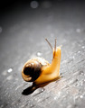 Common Garden Snail - PhotoDune Item for Sale