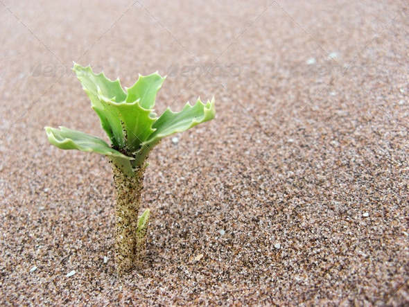 Plant in the Sand - Stock Photo - Images