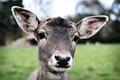 Young Deer - PhotoDune Item for Sale
