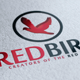 Red Bird Logo - GraphicRiver Item for Sale