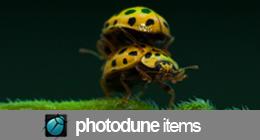 Photos - Bugs