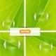 Download Vector Green Leaf Textures