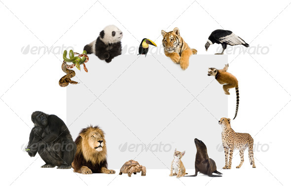 Group of wild animals around a blank poster - Stock Photo - Images
