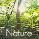 Green Forest - VideoHive Item for Sale