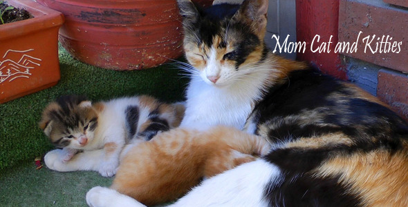 Mom Cat And Kitties 4