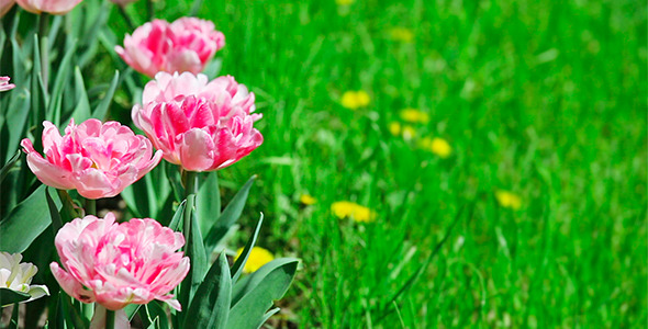 399 Pixels Wide Pink Flower Images For Facebook Timeline Cover ...