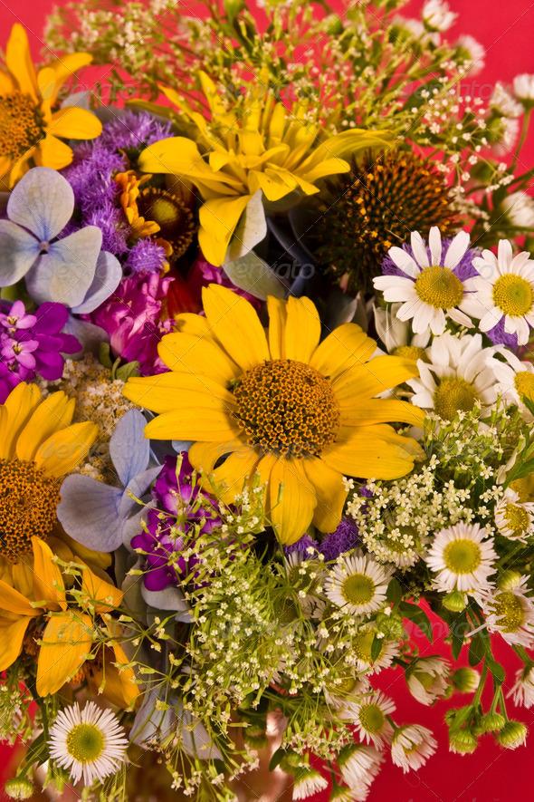 flower background - Stock Photo - Images