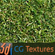 Download Grass Lawn Hi-Res Texture 01 from 3DOcean