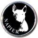 NapierBullTerriers