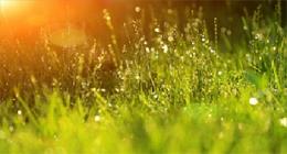 spring grass in the sun.
